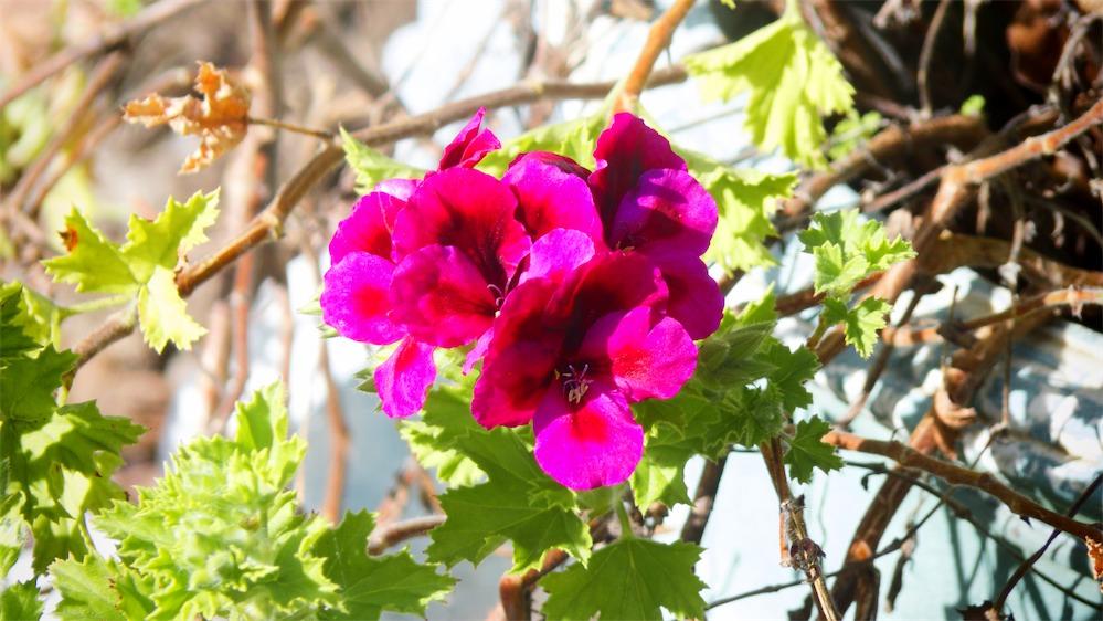 Lela's Flowers 2.jpg