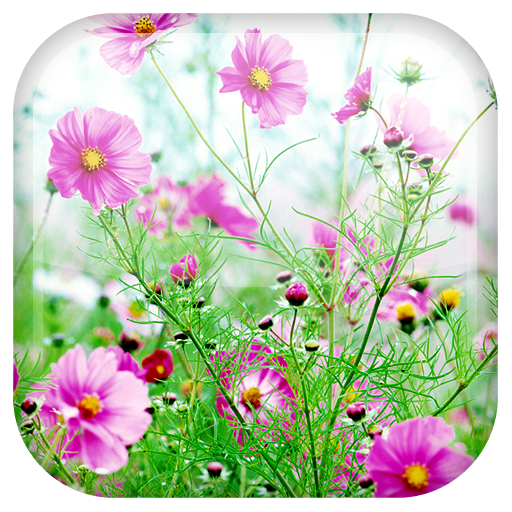 Sweet Flowers Live Wallpaper - Apps on