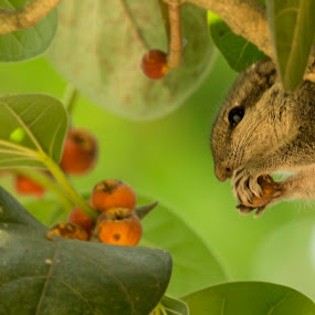 its foodtime by Shovan Sam - Animals Other Mammals ( canon )