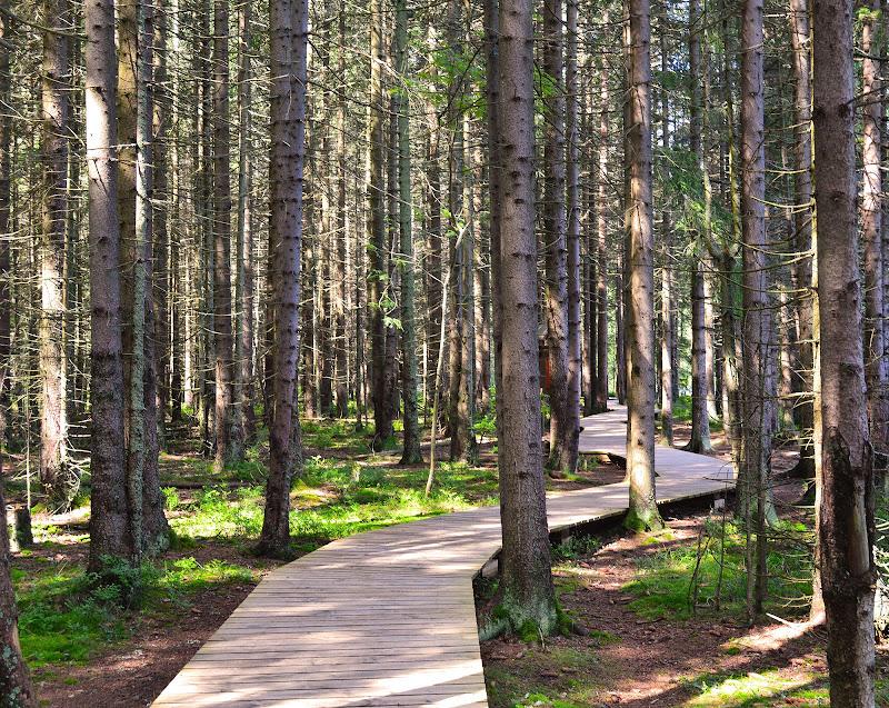 c'e' una strada nel boscco di stefano freddi