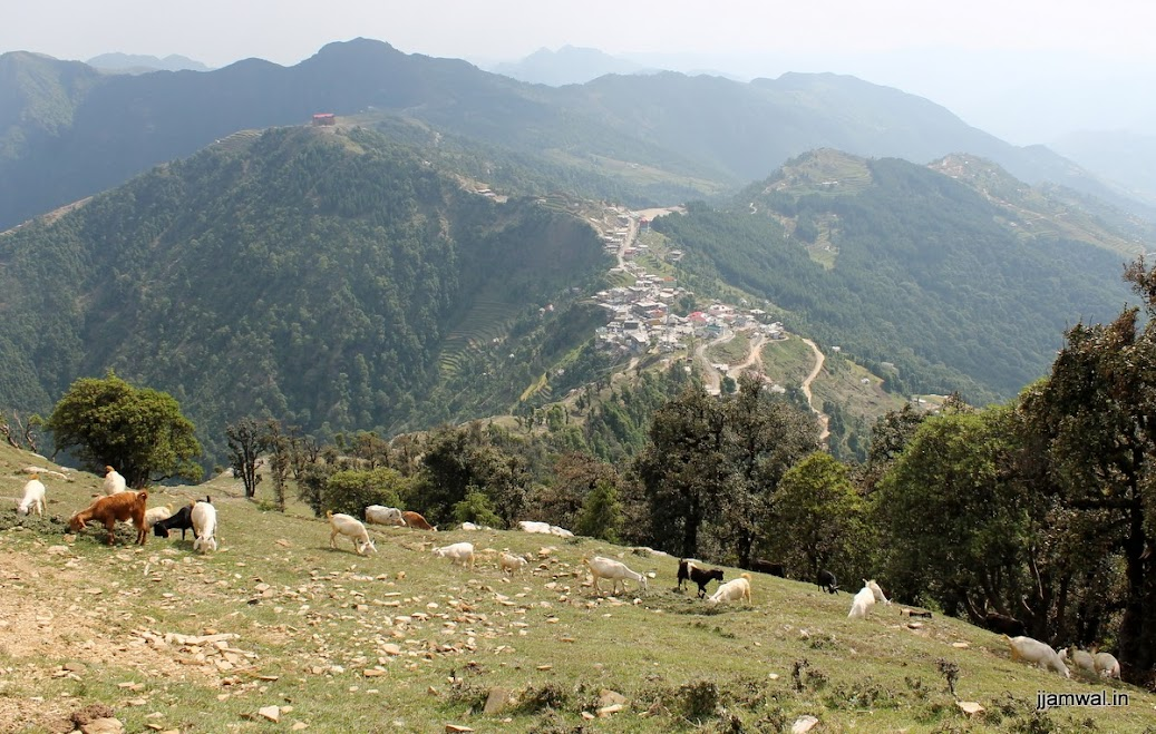 Goat herd and Haripur Dhar town in background