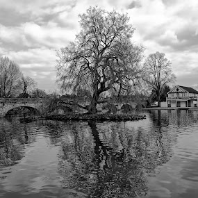 stratford by Kathleen Devai - Black & White Landscapes ( reflection, trees )