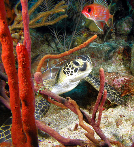 Choose snorkeling or scuba diving to explore seas  surrounding the island of St. Eustatius in the Caribbean.