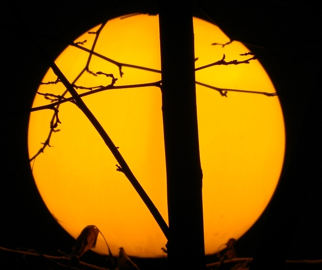 Sole d'Oriente di Domenico Mazza