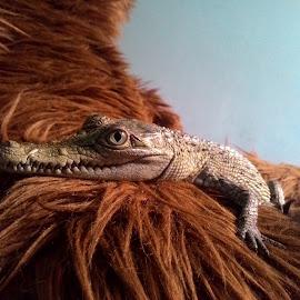 Novaguinea by Akkira Vradana - Animals Reptiles