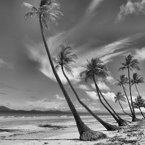 Tropical Paradise by Kinga Urban - Black & White Landscapes ( black and white, places, beach, landscape, tropics,  )
