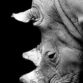 rhino by Alessandra Cassola - Black & White Animals ( #animal, #mammals, #rhino )