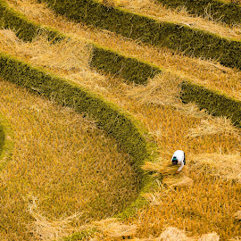 cuver by Dat Nguyen - Landscapes Mountains & Hills ( hill, rice, people )