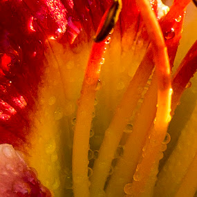 by Nancy Merolle - Nature Up Close Flowers - 2011-2013 (  )