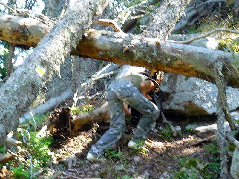 Паднали дървета в родопска гора