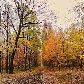 Datyňský les v podzimních barvách by Vláďa Lipina - Instagram & Mobile Android
