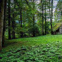 La casa nel bosco di