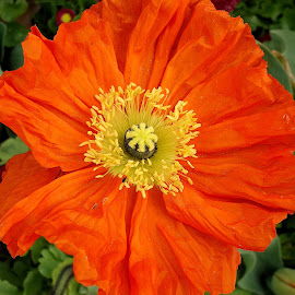 Sun by Philippe Smith-Smith - Flowers Flower Gardens ( flowers, fleur, blossom, flora, garden )