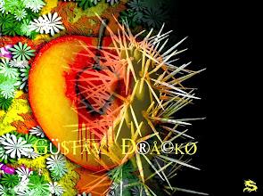 Photo: Cactus y Durazno Sangrando  Un espacio singular http://infernomax.blogspot.com.ar/