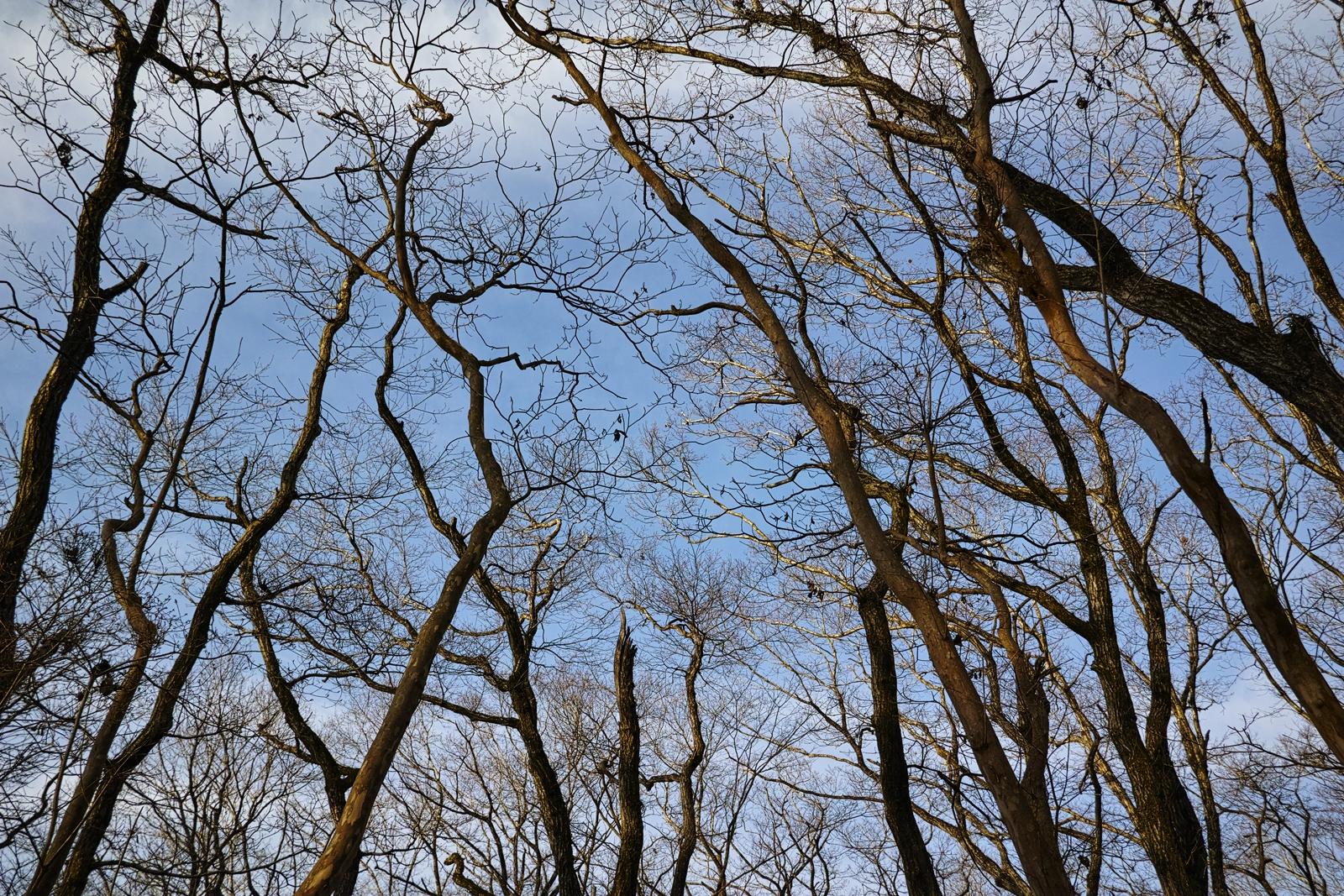 Photo: 音の無い森 / Silent forest.  聞こえるのは 足を踏みいれる乾いた葉の音 静寂に閉ざされた 音の無い眠りの森  SIGMA dp1 Quattro #SIGMA #dp1 #Quattro #Foveon #landscapephotography ( http://takafumiooshio.com/archives/750 )