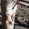 Árbol con mucha savia