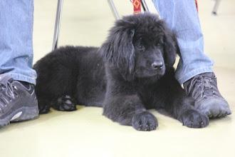 Photo: Bella unsere neue Freundin