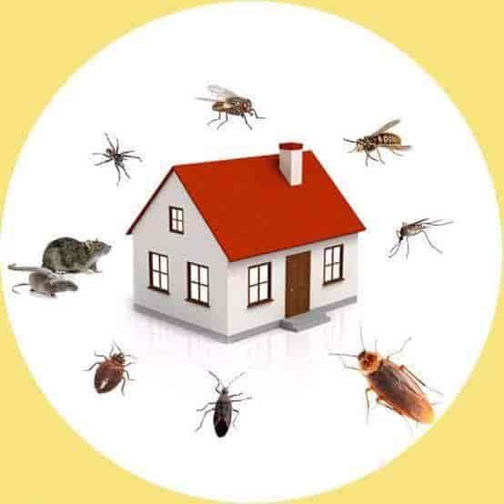 Indian Pest Control Services, Nallakunta - Residential Pest Control  Services in Hyderabad - Justdial