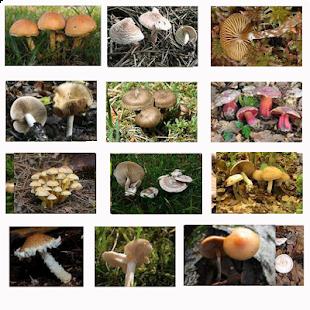 Kniha hub zdarma - náhled
