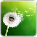 Dandelion live wallpapers LWP icon