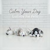 Calm Your Dog: Lullaby for Pets - Anti Anxiety, Inner Peace, Deep Relaxation Soothing Music