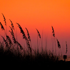 Sunset on the Gulf by Scott Turnmeyer - Landscapes Waterscapes ( mexico, sunset, gulf, clearwater, beach, sun )