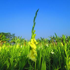Flower gardens in my village by Jumari Haryadi - Nature Up Close Gardens & Produce ( field, nature, village, garden, flower )