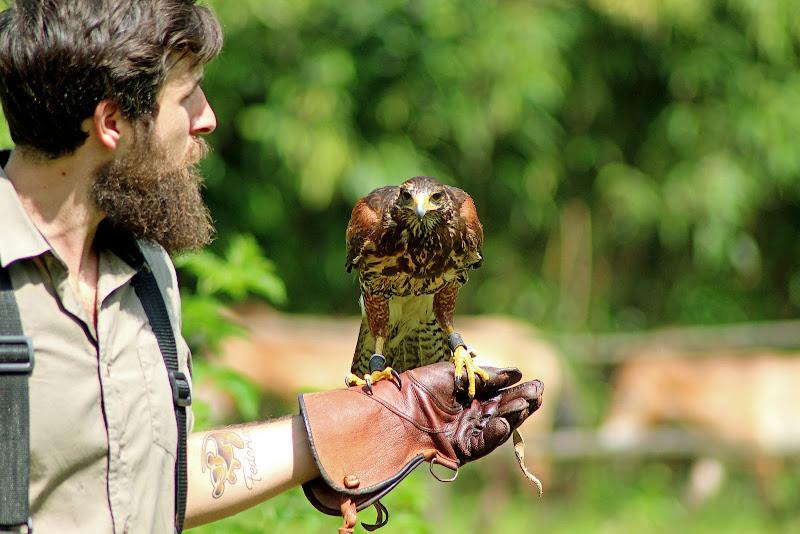 Il falconiere e il suo falco di utente cancellato