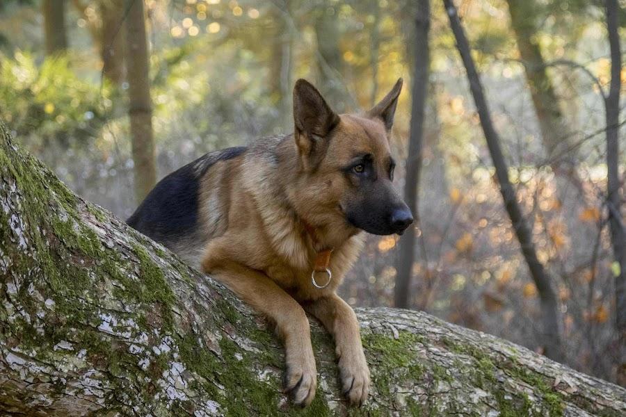 by Jiri Reisser - Animals - Dogs Portraits