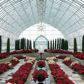Como Park Conservatory Poinsettia Display by Susan Fries - Buildings & Architecture Public & Historical ( poinsettia, conservatory, como, nature, como park, flower display, flowers,  )