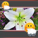 Easter Lily Clock And Weather icon