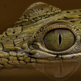 by Setiawan Halim - Animals Amphibians (  )