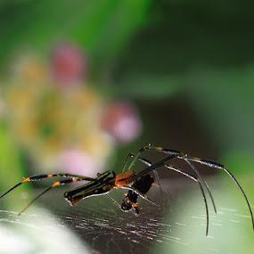 Breakfast by Irawan Sudjana - Animals Insects & Spiders