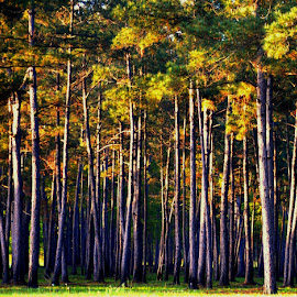 Parallel Lines by Rhonda Kay - Landscapes Forests (  )