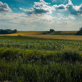 Golden fields by Antonio Knezevic - Landscapes Prairies, Meadows & Fields ( sky, grass, golden, clouds, fields )