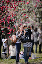 """Photo: This photo appeared in an article on my blog on Apr 2, 2013. この写真は4月2日ブログの記事に載りました。 """"More Folks Enjoying Spring Blossoms, Via 300mm @ f/2"""" http://regex.info/blog/2013-04-02/2238"""