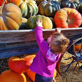 Harvest cutie by Kathlene Moore - Babies & Children Toddlers (  )