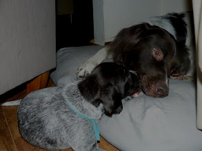 Photo: spelen met andere honden