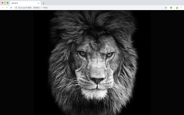 Lion HD Wallpapers New Tab Animals Themes