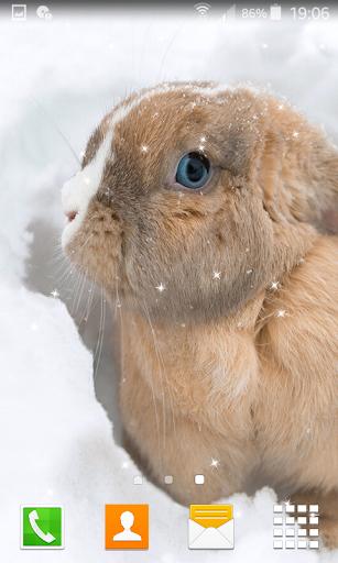 Rabbit Live Wallpapers  screenshots 4