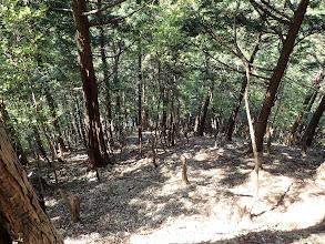 下に林道が見える