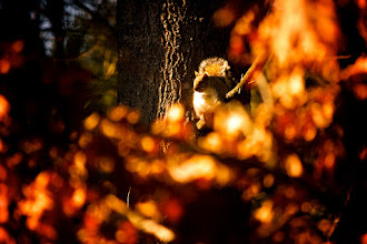 Photo: Day 50 - Warm and Fuzzy  Literally, nothing is as warm and fuzzy as a squirrel among the las fall leaves. Enjoy these last pleasant days of December little guy. Winters are long around these parts.  #365Project