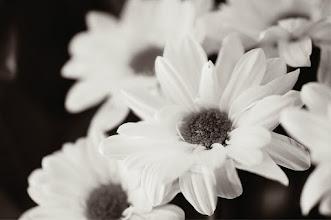 Photo: #flowerphotography  #breakfastclub  #monochromeartyclub  #monochrome  #blackandwhitephotography