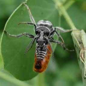 by Chhaditya Parikh - Animals Insects & Spiders ( balance )