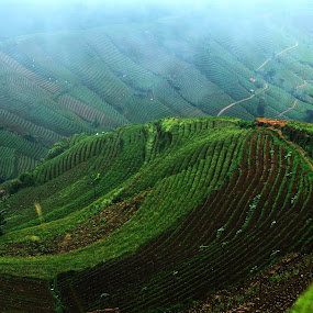 Argapura, Majalengka, Indonesia by Tamlikho Tam - Landscapes Prairies, Meadows & Fields