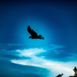 by Andrew Stevenson - Digital Art Animals ( digital photography, brids, bird, silhouette, skyscape )