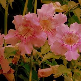 by Steve Tharp - Flowers Tree Blossoms