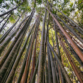 Bamboo  by Michael Otter - City,  Street & Park  City Parks