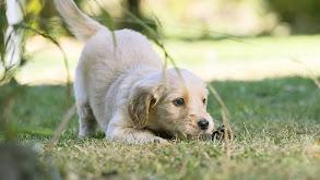 Puppy Super Senses thumbnail