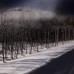 Light on land by Fredrik A. Kaada - Landscapes Forests ( hills, forest, tracks, shadows, whjite, contrast, brightness, mountains, winter, sky, blue, best, trees, lines, light, darkness )